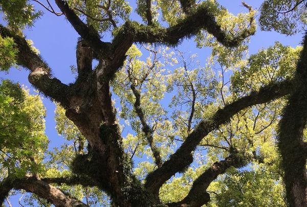 佐賀県護国神社の写真・動画_image_188858