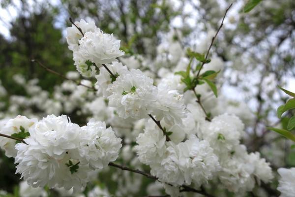 いつも花が咲いているの写真・動画_image_189107