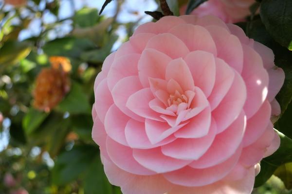 いつも花が咲いているの写真・動画_image_189108