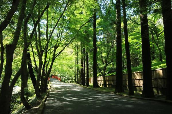 今熊野観音寺の写真・動画_image_190005