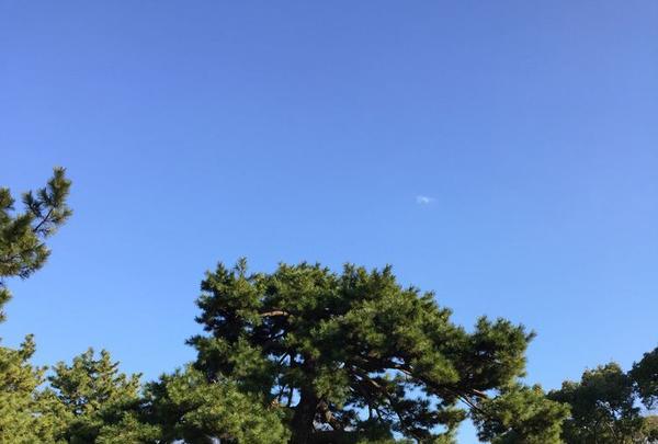 代々木公園の写真・動画_image_195181