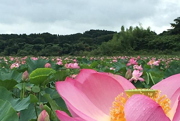 長沼の写真・動画_image_213285