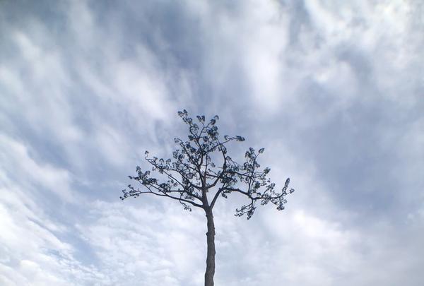 奇跡の一本松の写真・動画_image_216626