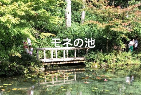 モネの池の写真・動画_image_217969