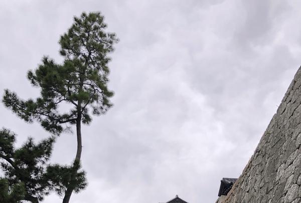 松山城の写真・動画_image_224976