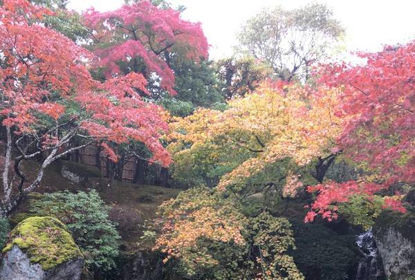箱根美術館の写真・動画_image_237331