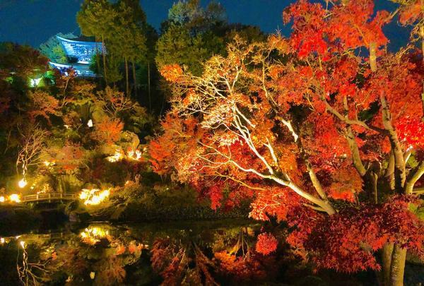 神勝禅寺 紅葉ライトアップ特別拝観の写真・動画_image_239591