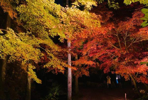 神勝禅寺 紅葉ライトアップ特別拝観の写真・動画_image_239592