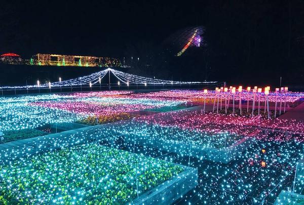 鳥取県立フラワーパークとっとり花回廊の写真・動画_image_241031