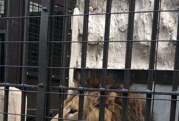 野毛山動物園の写真・動画_image_244029