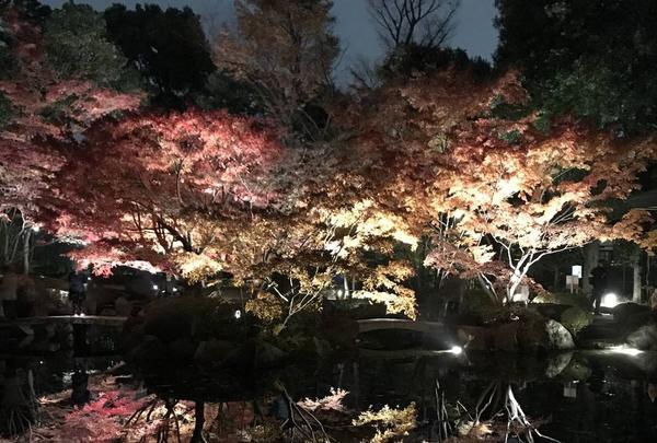 大田黒公園の写真・動画_image_244059