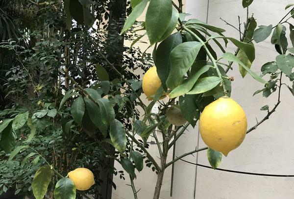 松江イングリッシュガーデンの写真・動画_image_250525