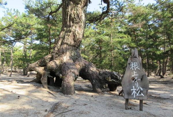 慶野松原の写真・動画_image_254811