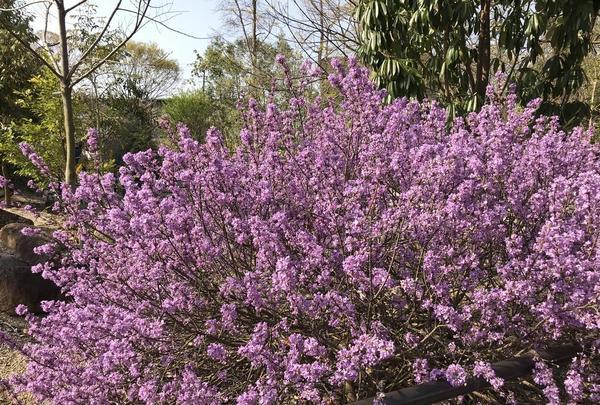 京都府立植物園の写真・動画_image_267746