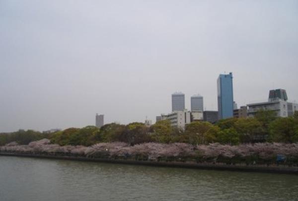 川の上から桜並木
