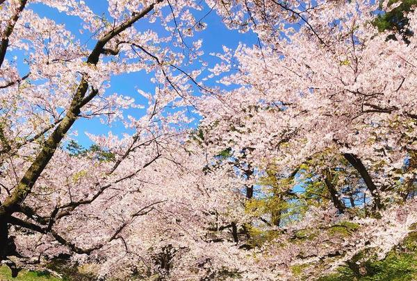 弘前公園の写真・動画_image_273995