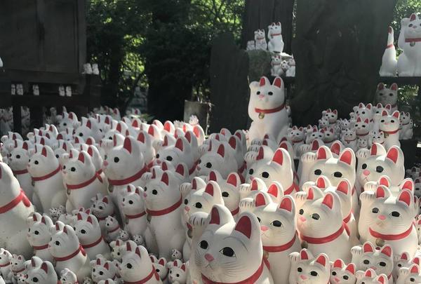 豪徳寺の写真・動画_image_279451