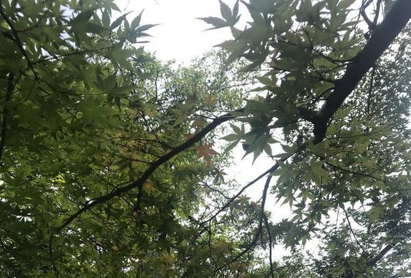 豪徳寺の写真・動画_image_279452