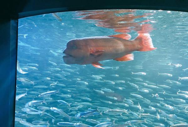 サンシャイン水族館の写真・動画_image_294074