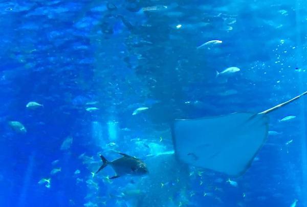 沖縄美ら海水族館の写真・動画_image_295471