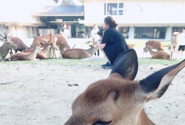 奈良公園の写真・動画_image_296456