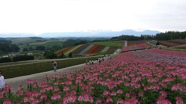 四季彩の丘の写真・動画_image_299918
