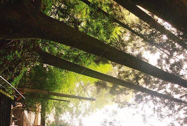 幣立神宮(幣立神社)の写真・動画_image_302322