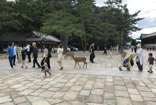奈良駅の写真・動画_image_315837