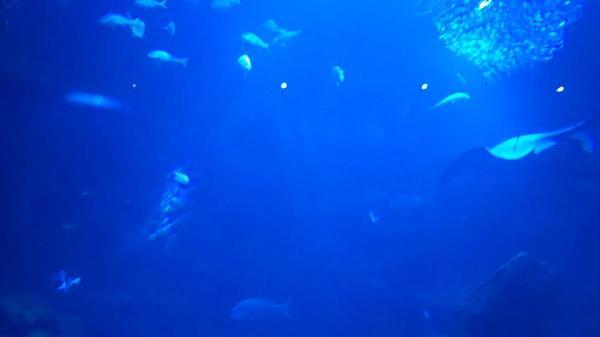 京都水族館の写真・動画_image_315987