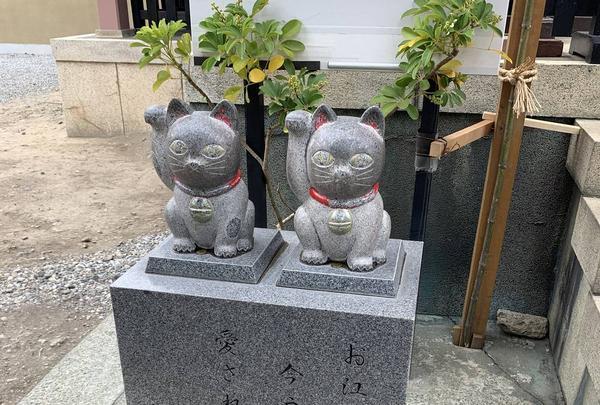 今戸神社の写真・動画_image_316277