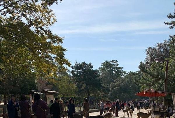 奈良公園の写真・動画_image_321807