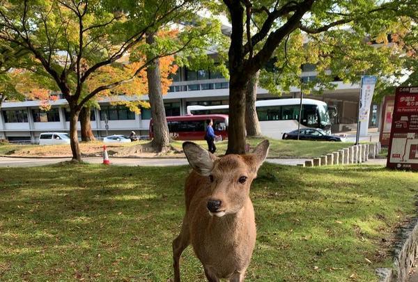 奈良公園の写真・動画_image_321808