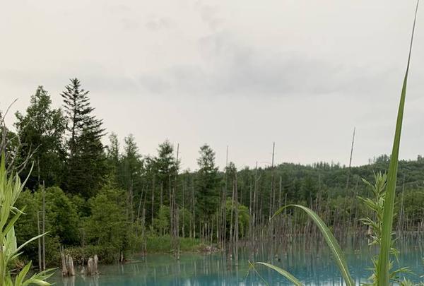 青い池の写真・動画_image_322120