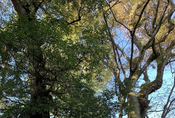 三朝神社の写真・動画_image_326381