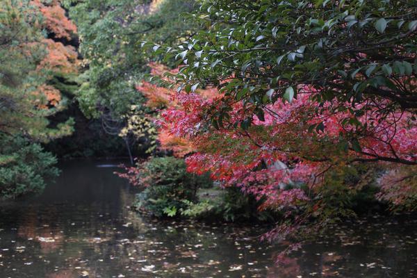 尾山神社の写真・動画_image_327648