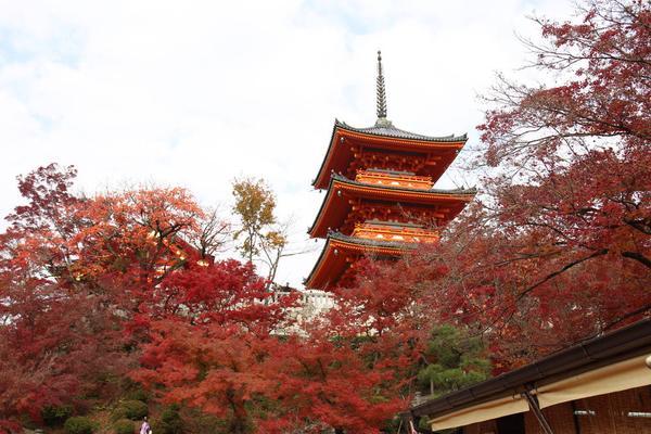 清水寺の写真・動画_image_328163