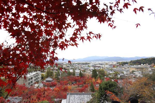 永観堂(禅林寺)の写真・動画_image_328192