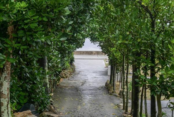 備瀬のフクギ並木の写真・動画_image_332590