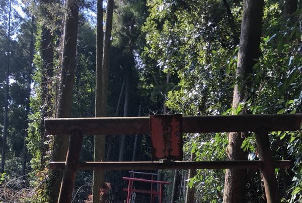三凩稲荷神社の写真・動画_image_338431
