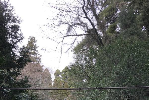 国造神社の写真・動画_image_338440