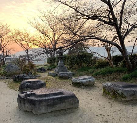本薬師寺跡 ホテイアオイの写真・動画_image_345081