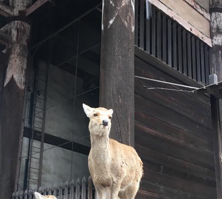 東大寺の写真・動画_image_349827