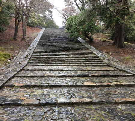 東大寺の写真・動画_image_350407