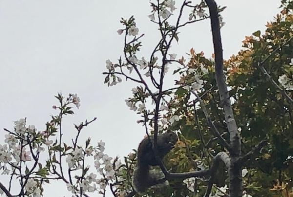 鶴岡八幡宮の写真・動画_image_353776