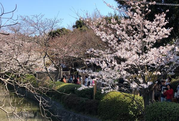 鶴岡八幡宮の写真・動画_image_354372