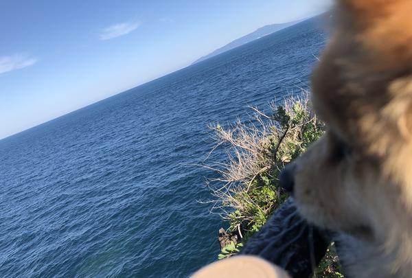 城ヶ崎海岸の写真・動画_image_356661