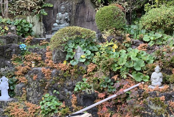 長谷寺の写真・動画_image_363154