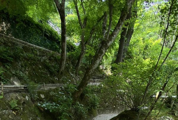 宝泉院の写真・動画_image_365524