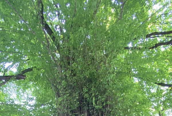 貴船神社の写真・動画_image_366000