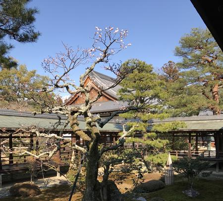 大覚寺の写真・動画_image_374130